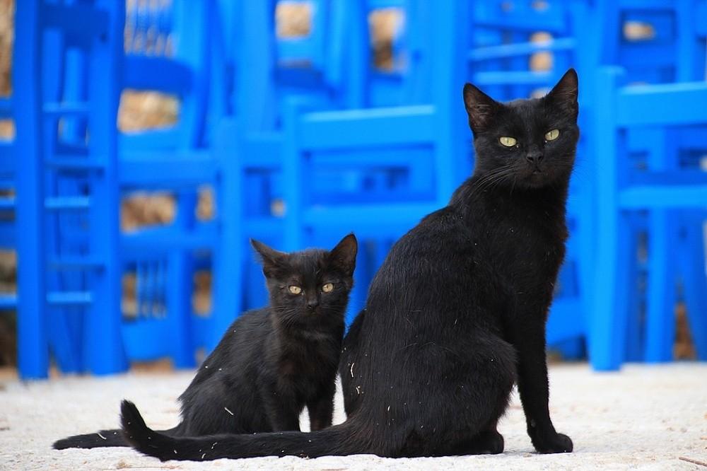 Говорят, что в Греции совершенно уникальные уличные коты. Вальяжные, сильные, стройные — словно пото