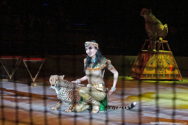 21. Цирк Костюк. гепарды. 31.10.16.04..jpg