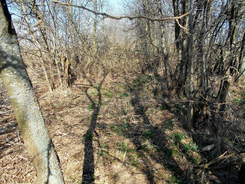В лесу ... DSCN1347.JPG