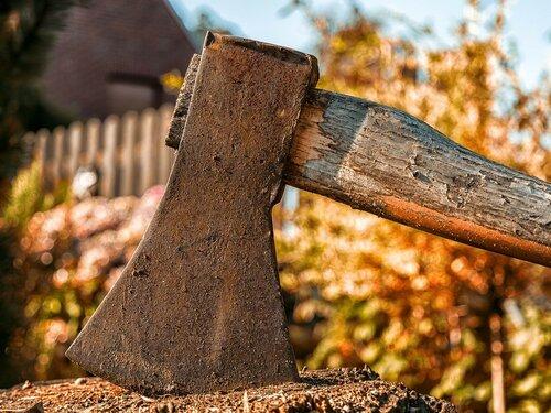В Бельцах вырубят полсотни деревьев на двух улицах