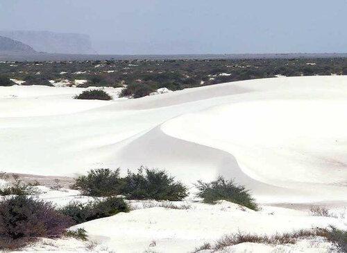 Самое «инопланетное» место на земле: необыкновенный остров Сокотра