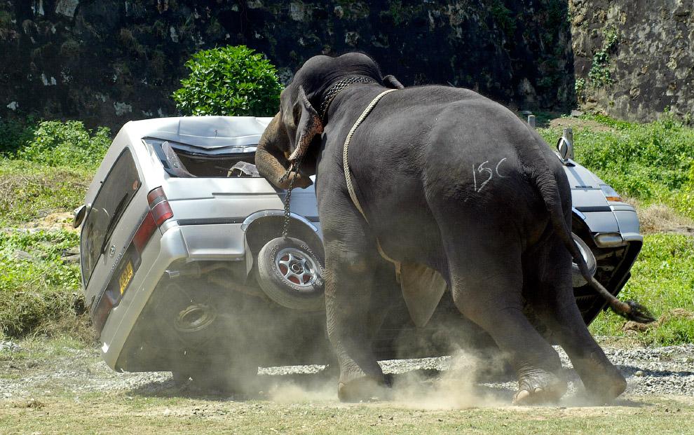 11. Что вы будете делать, если на вас надвигается многотонный взбесившийся слон ? Именно такая