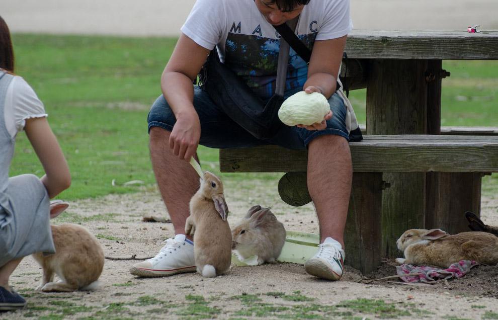 26. Маленькие крольчата тоже получают свою долю.