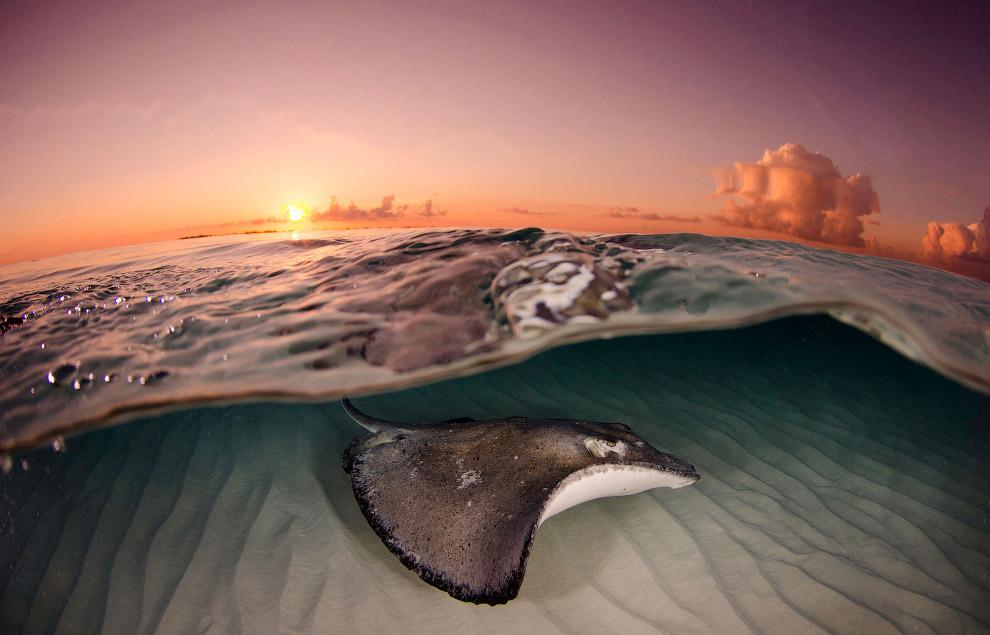 14. Национальное управление океанических и атмосферных исследований создано в 1970 году. В его
