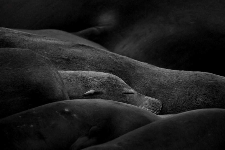 Животные от фотографа Mukul Soman