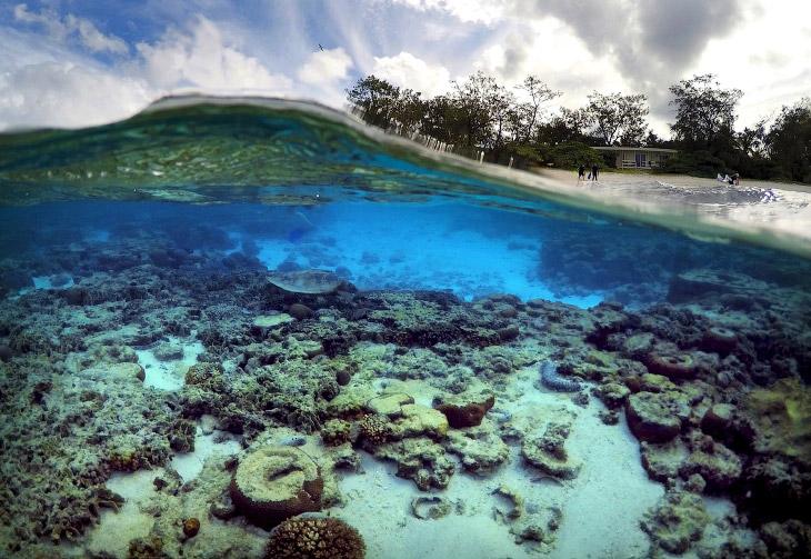 Структура этого рифа образована (построена) из миллиардов крошечных организмов, известных науке
