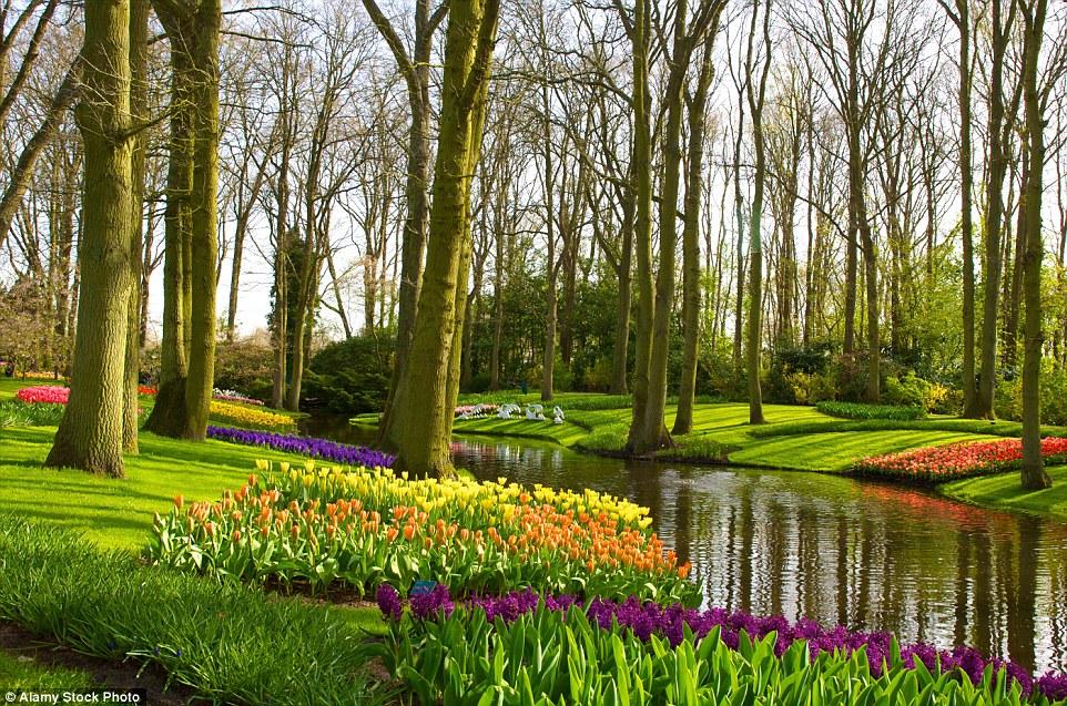 Весной в парке можно насладиться красотой семи миллионов цветов около 800 разных сортов.