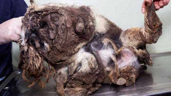 Общество по защите животных столкнулось с удивительным явлением. Перед ними сидел грязный комок шерс