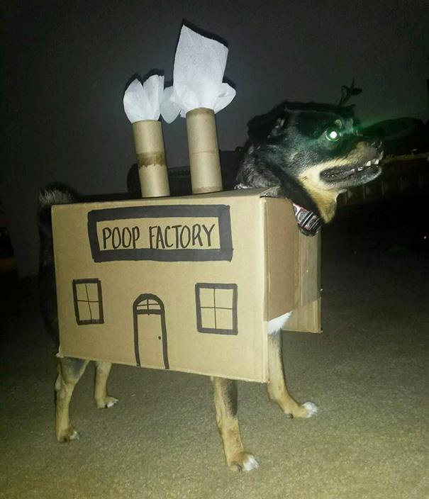 После того как пес в очередной раз нагадил на ковер, хозяин сделал ему карнавальный костюм «какашечн