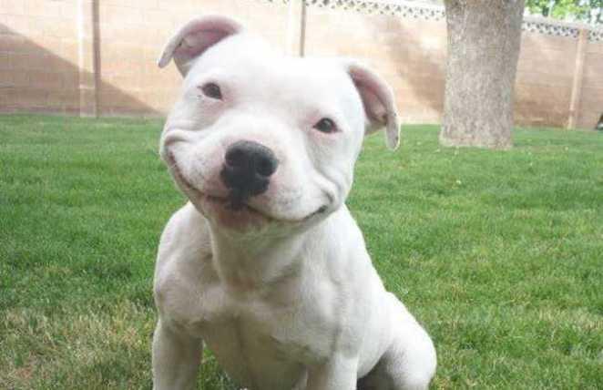 «Собака просто бегала, играя с мячом, когда взявшийся из ниоткуда человек, попытался его схватит
