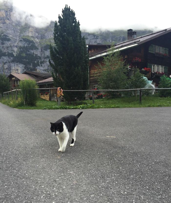 Кошка вывела путника к подножию горы и спокойно пошла по своим делам. Видео чудесного спасения ласко