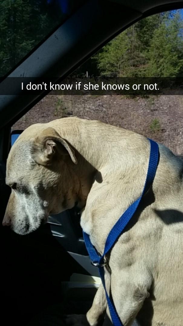 Девушка устроила любимой тяжелобольной собаке прощальный день перед усыплением (19 фото)