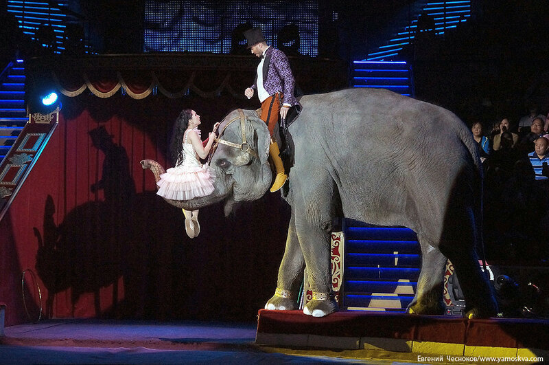 Осень. Цирк. Корниловы. слоны. 02.09.16.05..jpg
