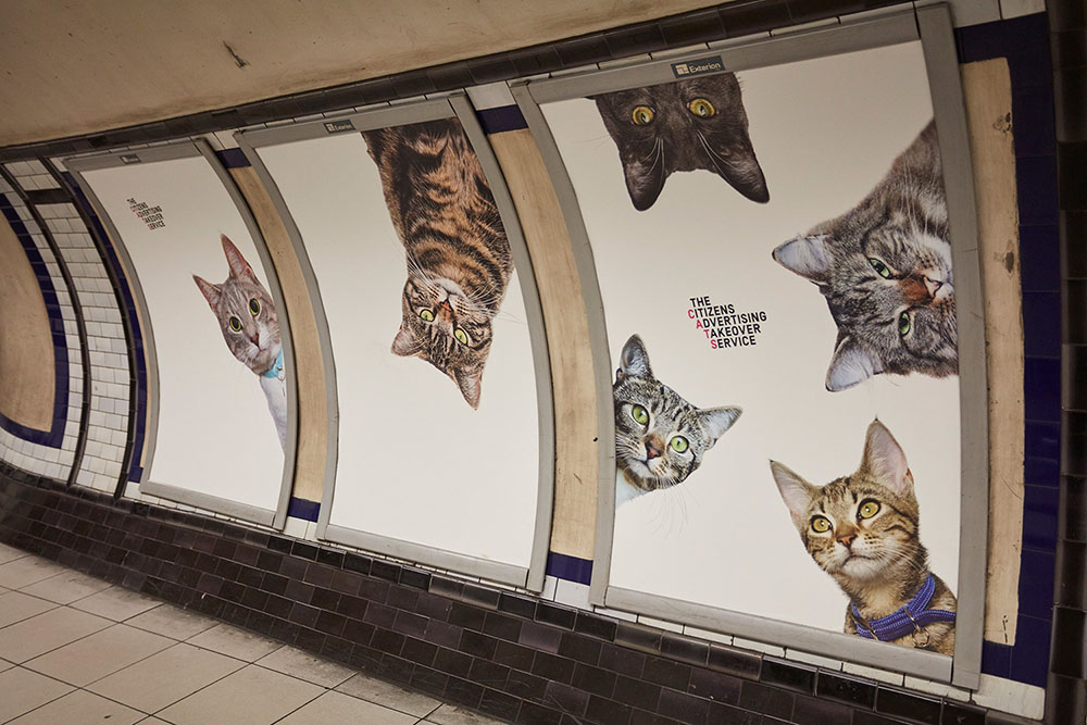 A Herd of Cats Fill Advertising Placements at a London Tube Stop for Two Weeks (9 pics)
