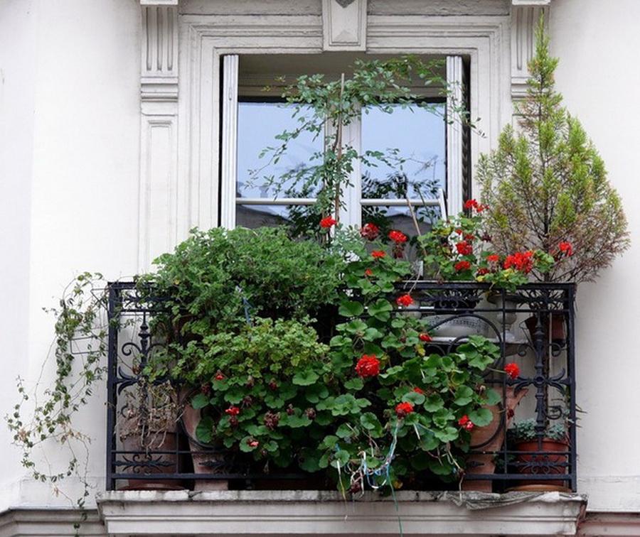 Как создать прекрасный сад на балконе - Ярмарка мастеров - р.