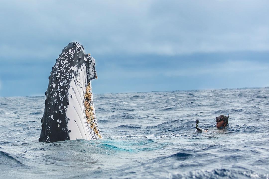 Захватывающие подводные фотографии Нади Али