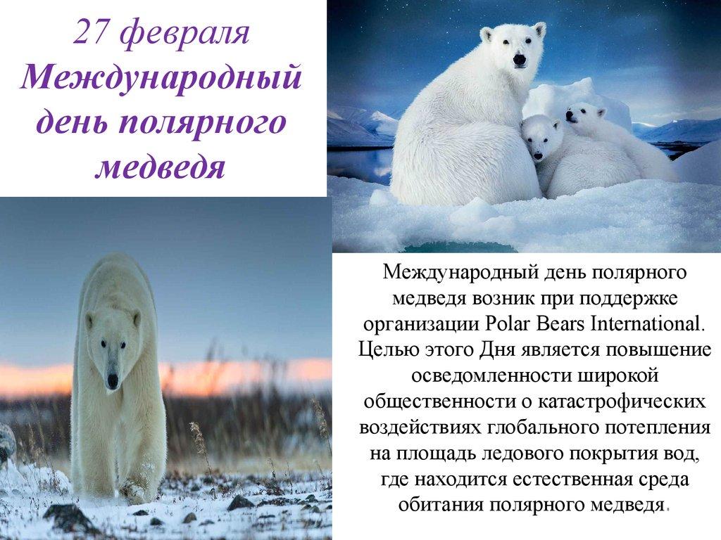 27 февраля Международный день полярного медведя-белого открытки фото рисунки картинки поздравления