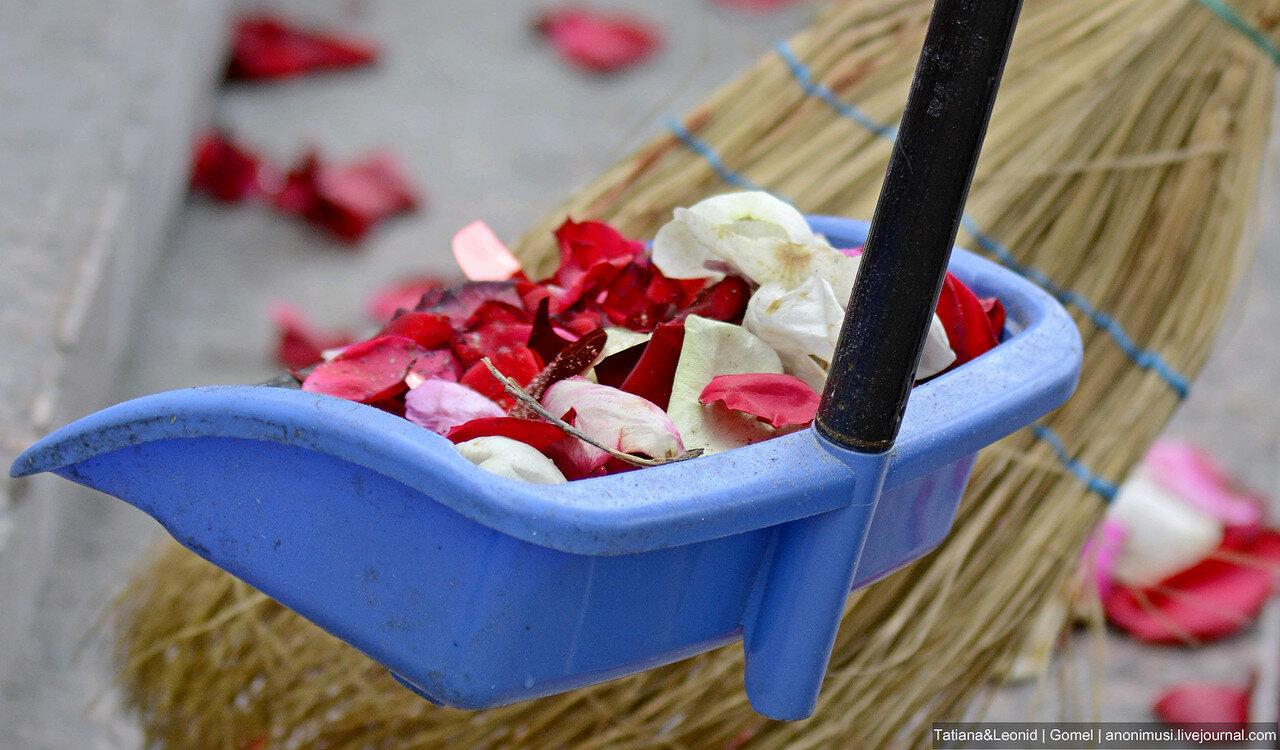 Лепестки опавших роз