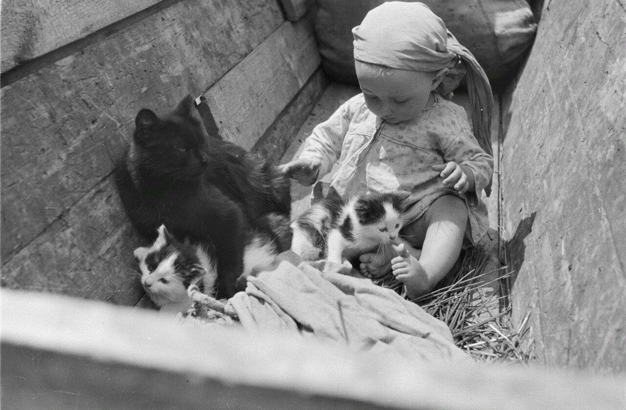 Малыш и кошка с котятами