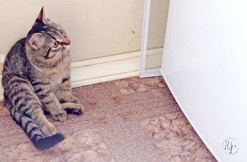 О котенке