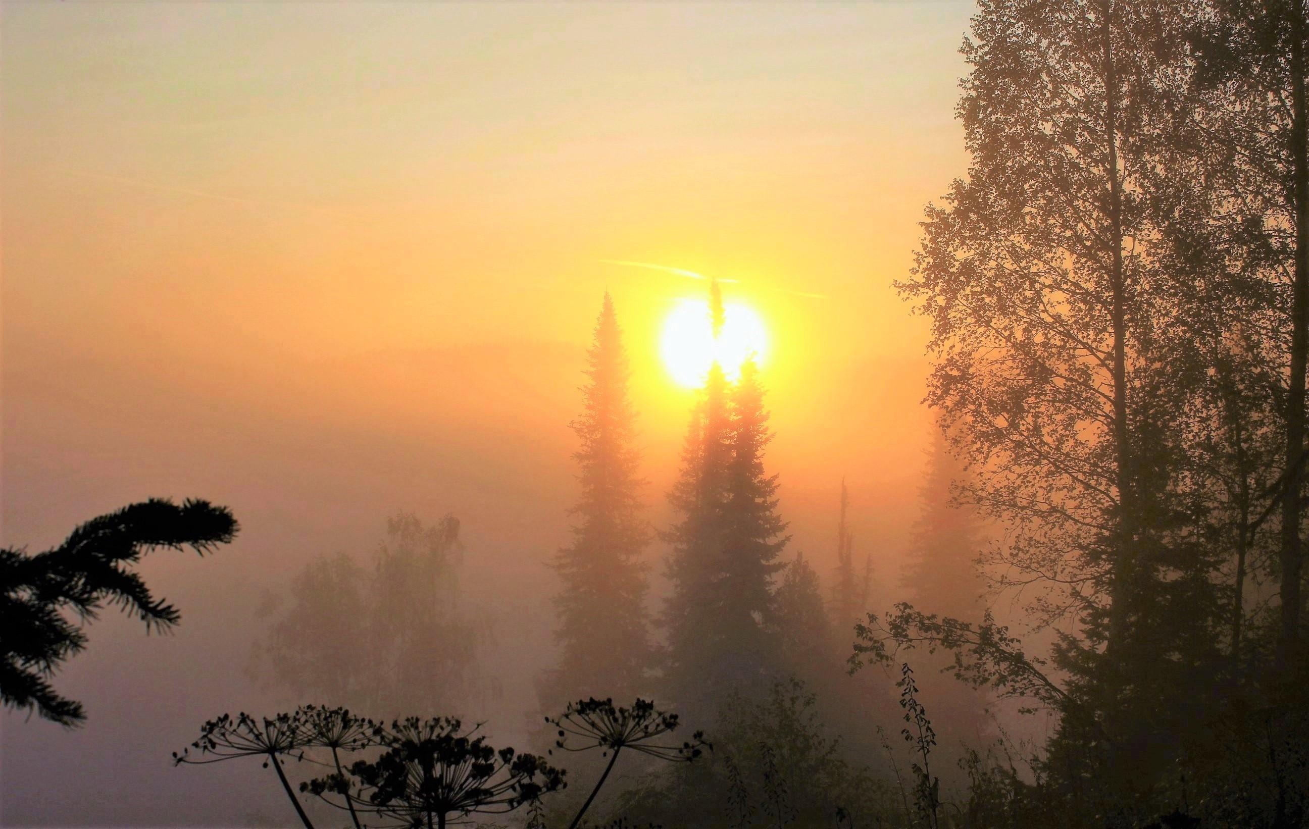 Солнце будит сонный лес