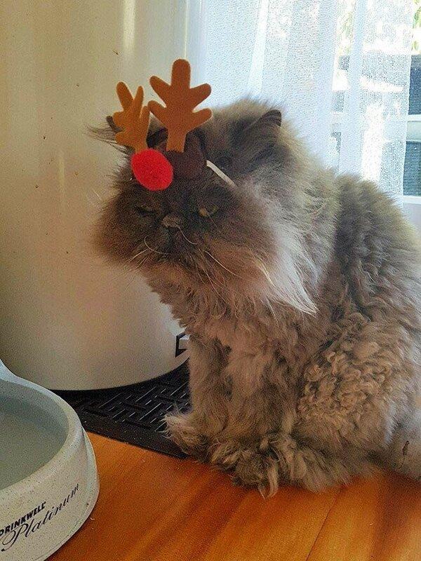 0 17d27f 80064aa0 XL - Новогоднее настроение у домашних животных