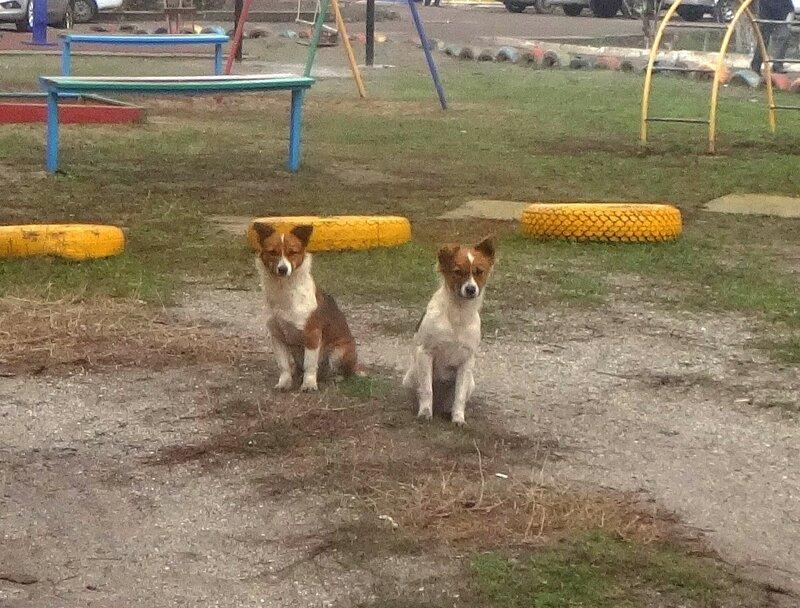 Собачки ... DSC03689.JPG