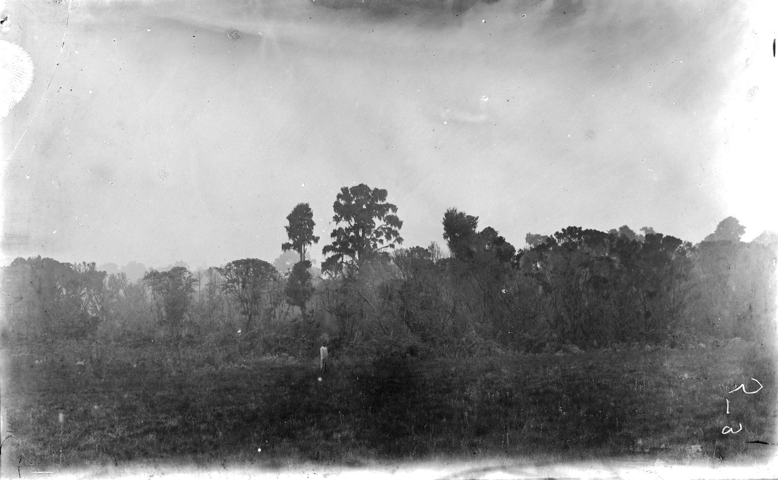 361. Вид на луг на верхней границе джунглей к югу от Мавензи