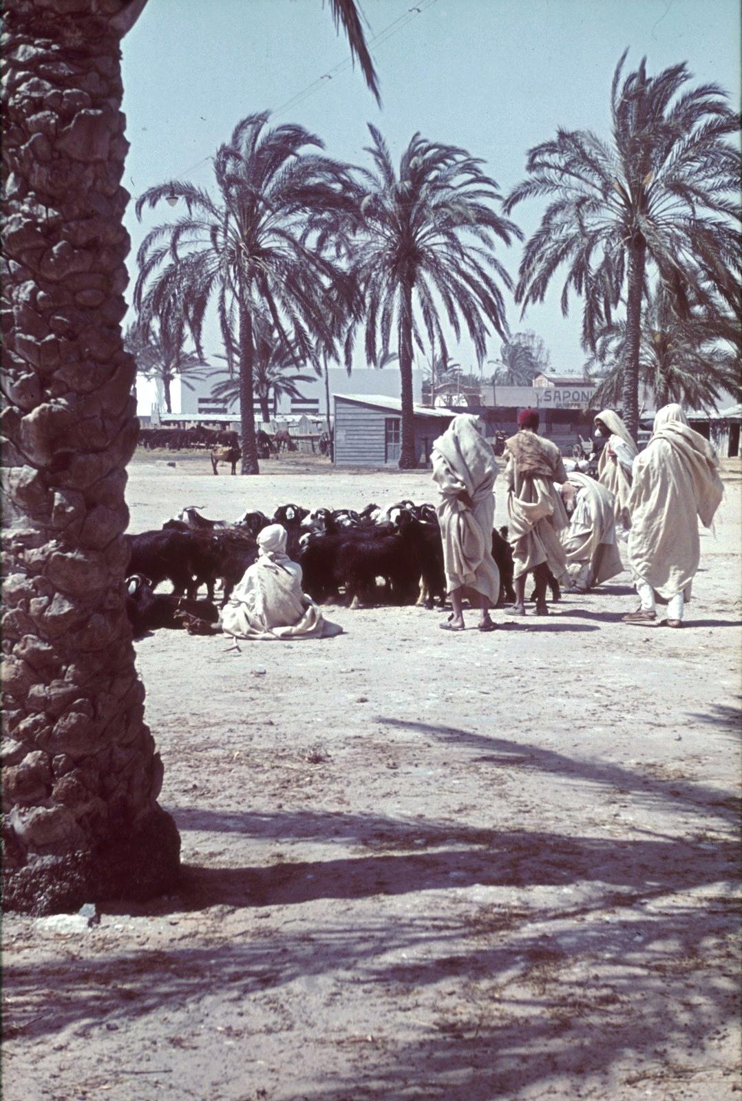 Бенгази. Пастух с стадом коз