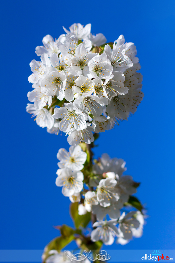 Я люблю все цветы, выпуск 215.