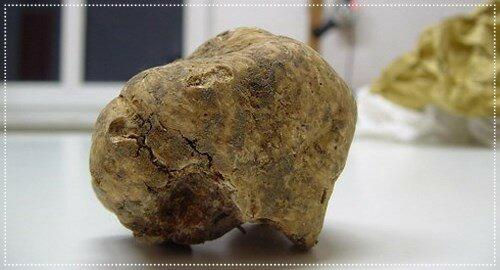 Cамый дорогой гриб в мире - белый трюфель