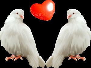 голуби с сердечком