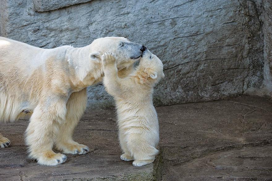 — Ты ж мамина зая! — Мама, ну я не зая, я же медведь!