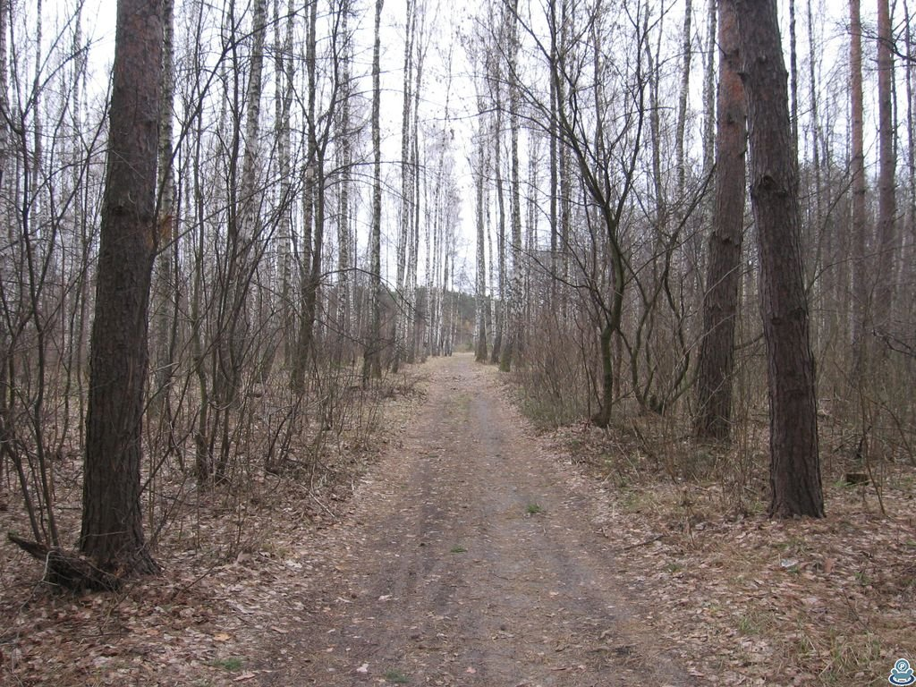 Дорога через юбилейный лес
