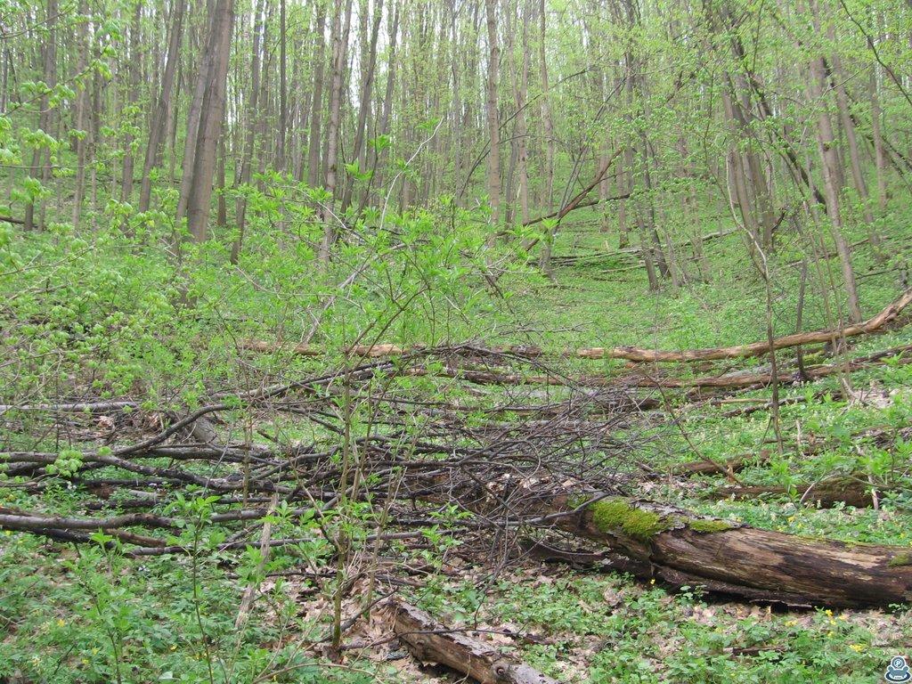 Лесной завал