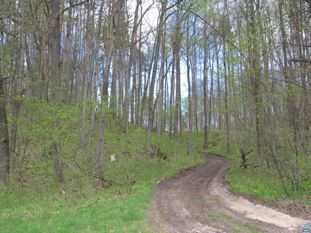 Дорога между холмов