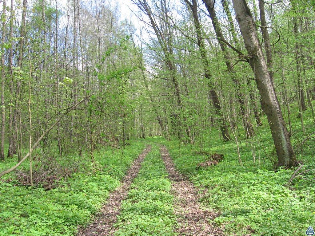 Колея в лесу