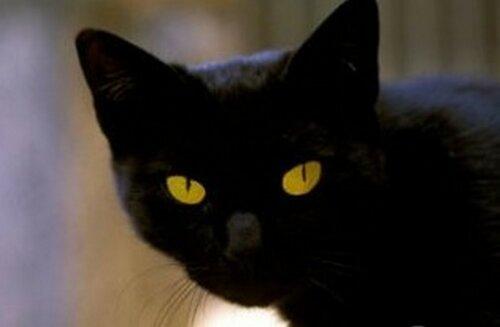 Римский бездомный кот получил в наследство миллионы