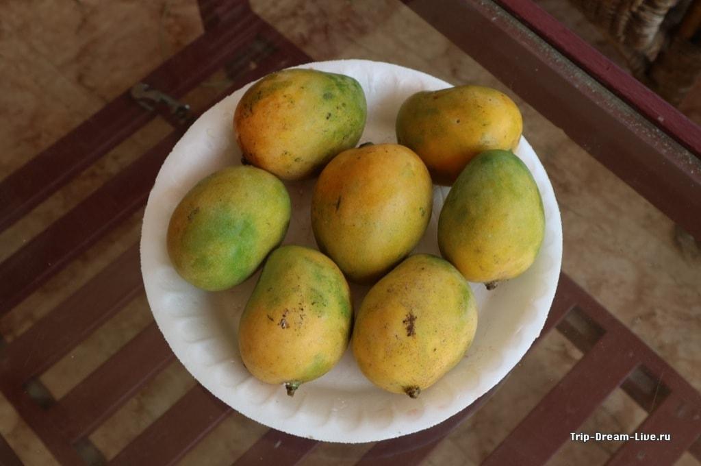 Ещё манго, менее симпатичные, но более вкусные