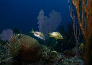 На коралловом рифе