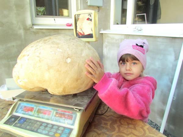 Осенний рекордсмен: На Запорожье вырос гриб весом более 6 килограммов (фото)
