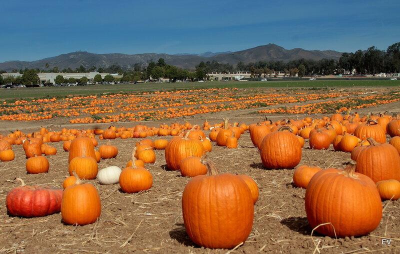 Осенний урожай....