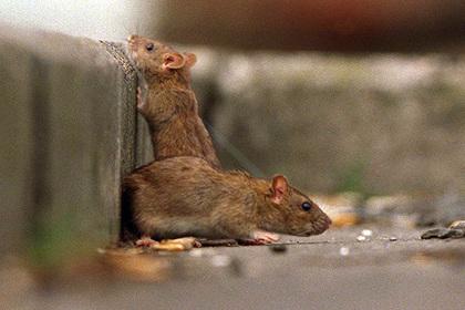 Американский дизайнер сдает дом с крысами