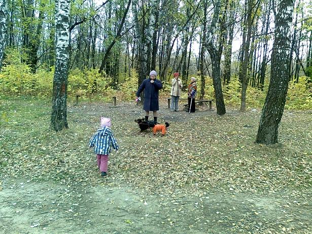 осенний лес на Володарке