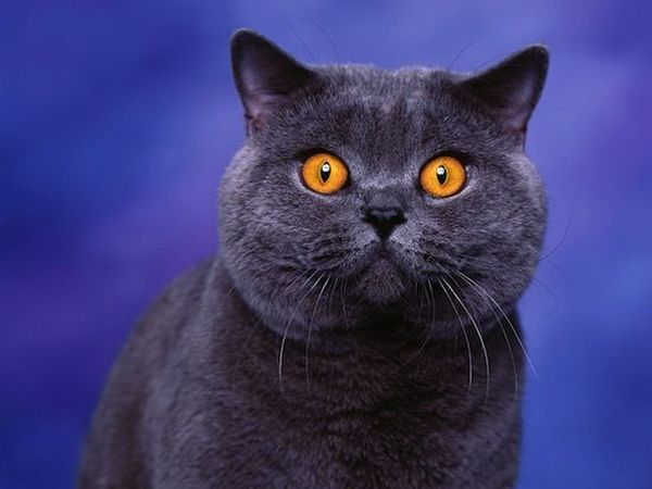 10. Почему кот иногда царапает пол или