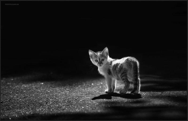 Фотографии животных, сделанные Сергеем, наиболее привлекательные работы. Предлагаем просмотреть подб