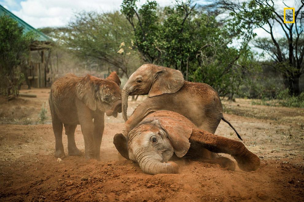 В течение многих лет отношения местных жителей со слонами были непростыми. Некоторые племена ра