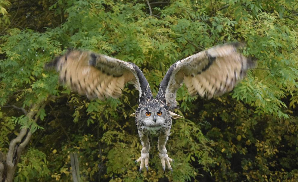 Расправляя крылья. (Фото Omri Feldberg)