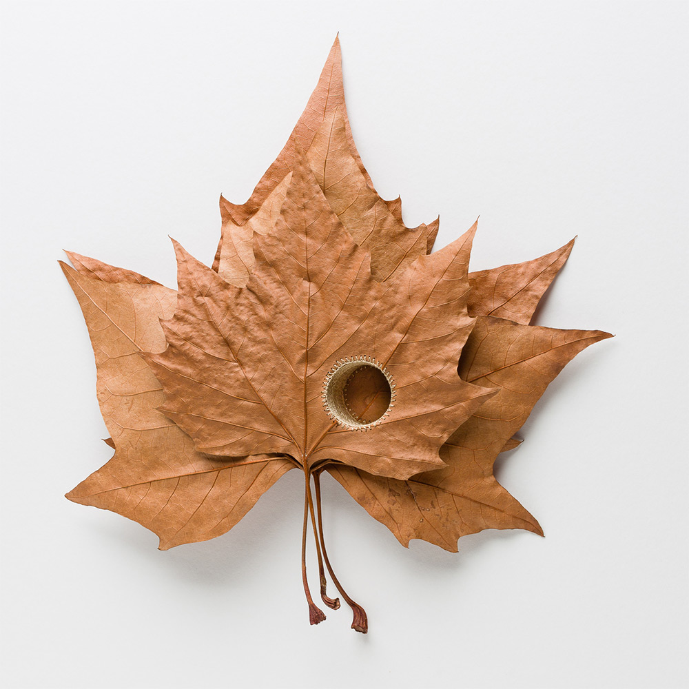 art-photographers.co.uk To truly appreciate the delicacy of Susanna Bauer 's leaf sculptures,