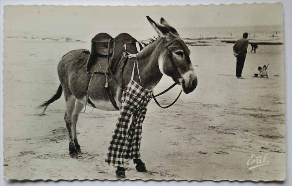 poitou-donkeys-42.jpg